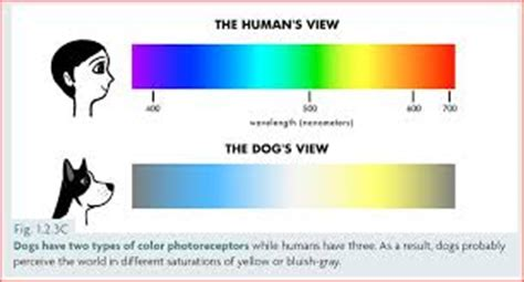 why are dogs colorblind genius hour 2 why are dogs color blind judy moody mrs middleton s class website