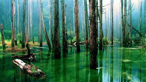 cool amazon amazon rainforest wallpapers wallpaper cave