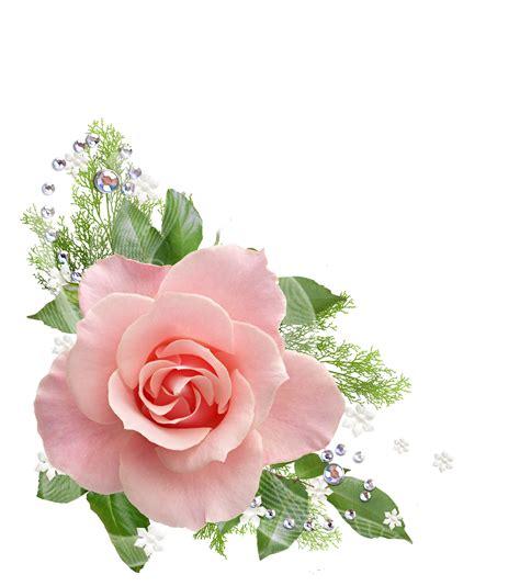 imagenes flores jasmin lindas 174 colecci 243 n de gifs 174 marcos esquineros para fotos de flores