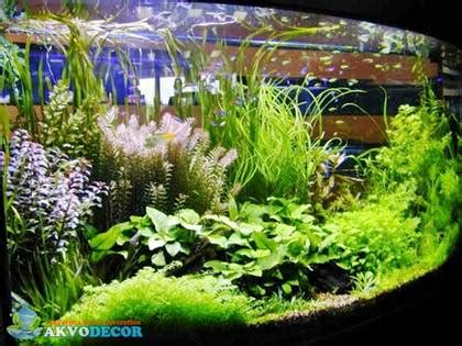 Jual Lu Aquascape Murah keunggulan aquascape dibanding aquarium konvensional