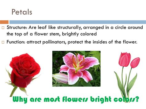 why are flowers brightly colored parts and functions of the plant petals sepals stamen