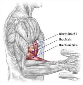 Shoulder Pain When I Bench Press Build Bigger Bicep Peak With Dumbbell Hammer Curls On The
