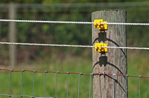 electric fences electric fencing for horses cattle and other livestock