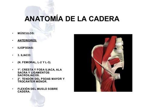 anatomia de la cadera anatomia de cadera