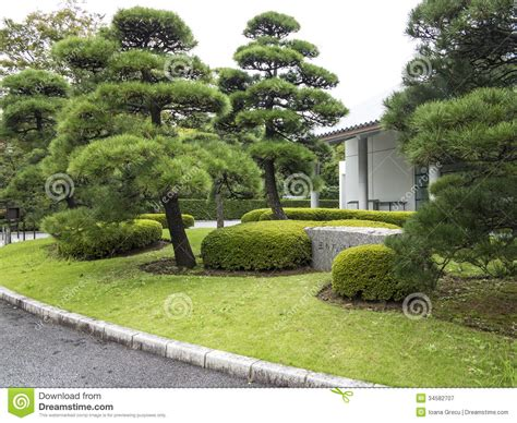 Landscape Design Pine Trees Pine Trees In Japanese Garden Royalty Free Stock