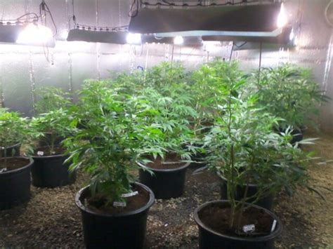 cfl grow lights for indoor plants cfl grow ls for plants