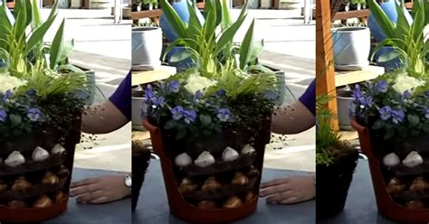 bulb container garden tutorial gives you flowers from fall