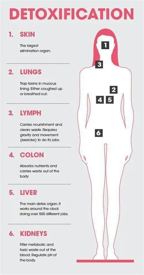 Liver Kidney Lymph Detox Liquiteria by Detoxification Six Detox Organs Skin Lungs