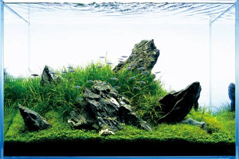 Japanese Aquascape Artist by The Of Nature Aquariums Miyabi Aqua Design