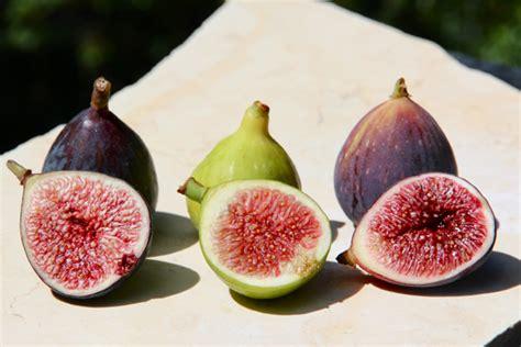comparing fresh fig varieties bakepedia tips