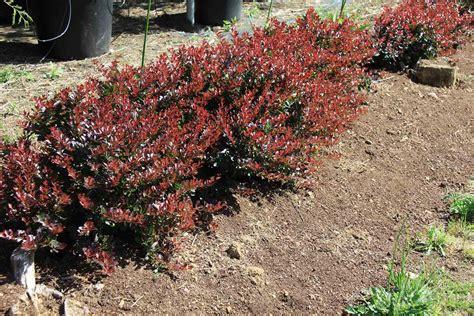 el jardin de flor baja quehagoyoaqui es plantas para setos 191 que tipo de seto necesitas diez