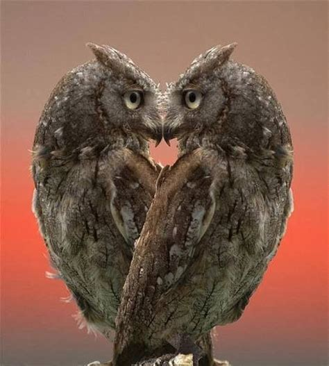 owl lover 32 best images about owls so cute on pinterest owl art