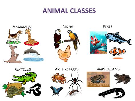 Some Animals Are More Equal Than Others Worksheet Answer Key