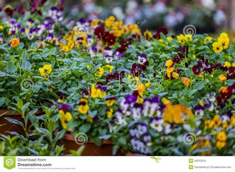 Garden Centre Stock Image Image Of Flower Gardening Garden Flowers For Sale