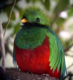 Barn Owl Facts The Quetzal Bird Beauty Of Bird