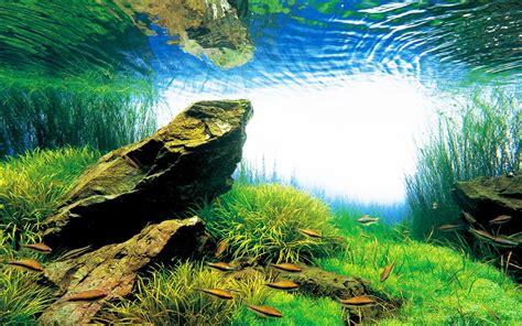 aquascape amano takashi amano creator of the nature aquarium