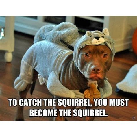 Funny Animal Memes Tumblr - trending current events squirrel squirrels dog dogs