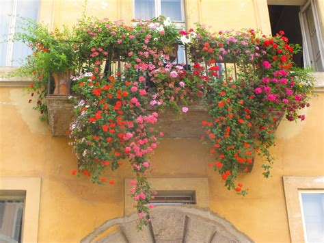 beautiful balcony with sunbeds and plants with beautiful flowers in beautiful italy floral artistry by alison ellis