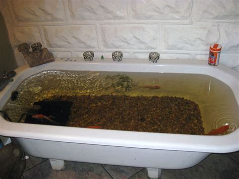 a fish in the bathtub bathtub fish pond 28 images upcycled broken tub into a fish pond our best tips