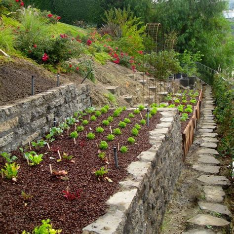 vegans living off the land gardening on a hill bank steep slope