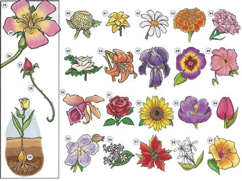 list of flowers trees plants and flowers vocabulary pdf