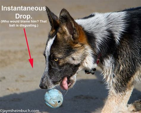 how to your to come when you call 12 lifesaving tricks to teach your does your pooch come when you call an