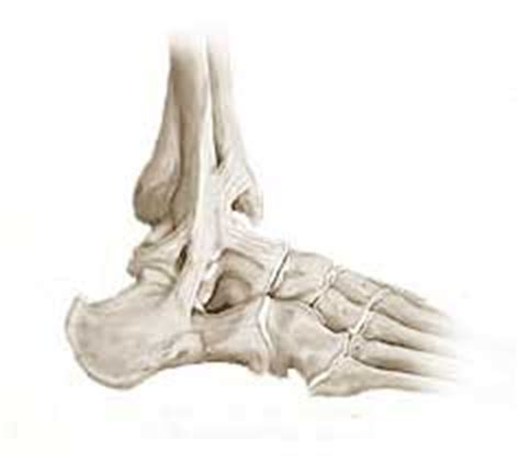 dolore caviglia interna frattura della caviglia