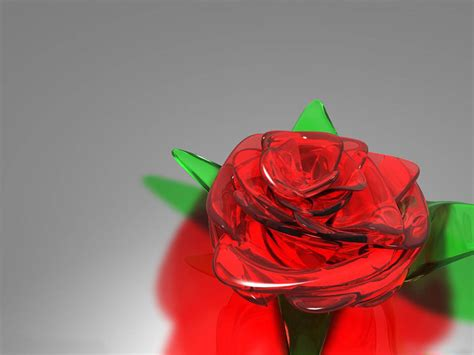 rose in glass wallpapers glass rose wallpapers