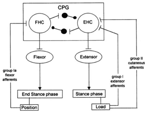 cpg pattern finder brain sciences free full text towards effective non