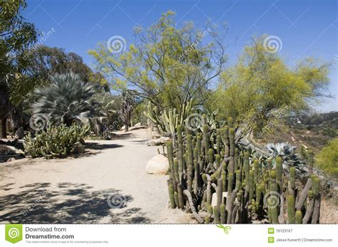 cactus garden in san diego royalty free stock photography