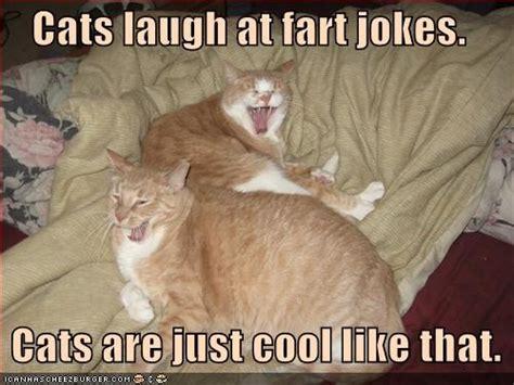 Cat Fart Meme - i love farts cats pinterest