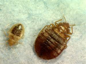 Bronx Family Court Search I Went To Court And Brought Home Bedbugs Single Says Ny Daily News