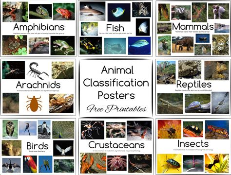 printable fish poster animal classification posters and games free printables