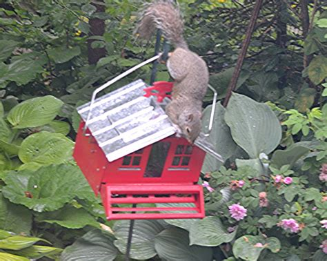 nature tales and camera trails squirrel proof bird feeder