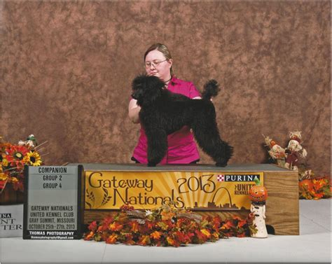 ukc shows show brags windswept poodles