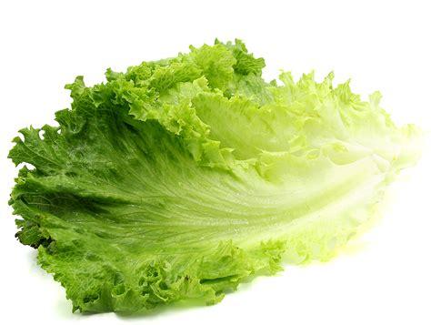 Lettuce General green leaf lettuce filets information and facts