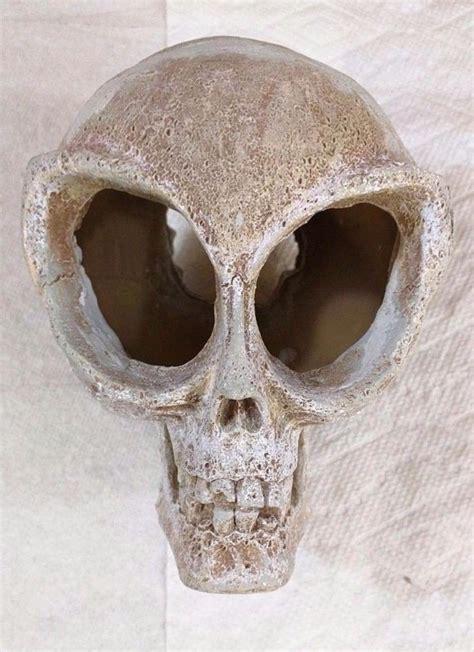 Skull Aquarium Decorations by Aquarium Decorations Skulls For Sale Classifieds