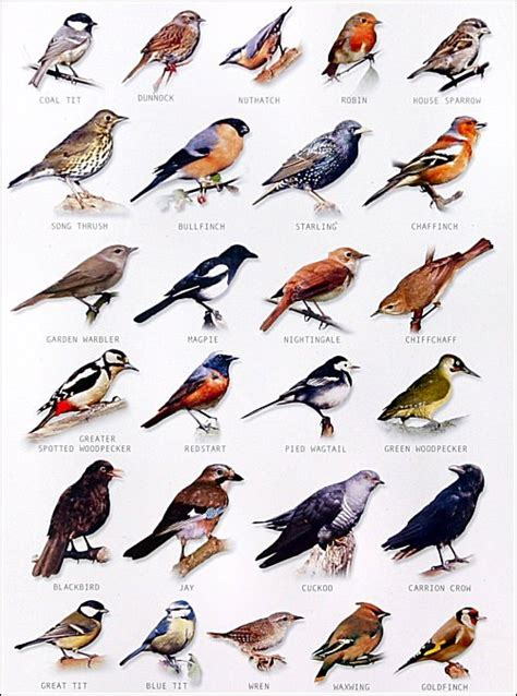 types of backyard birds garden bird chart watch the birds
