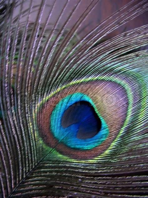 bild pfauenfeder eine sch 246 ne pfauenfeder stockfoto colourbox