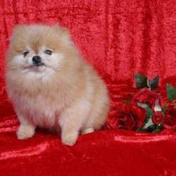 best in show grooming best in show mobile grooming pet groomers napa ca yelp