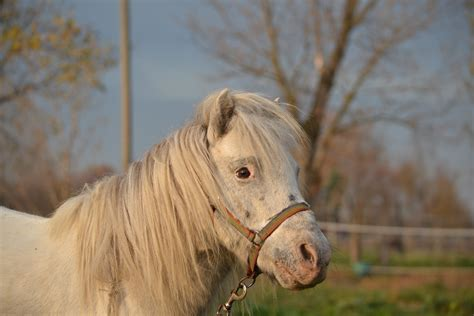 carrozze e cavalli i cavalli e le carrozze a s d cavalli e carrozze