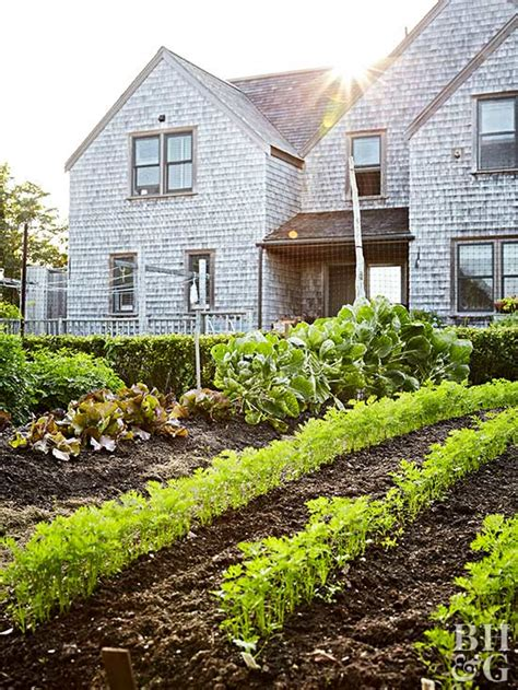 Planning Your First Vegetable Garden House Vegetable Garden