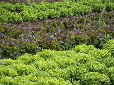 semina giardino semina tipi e trapianto