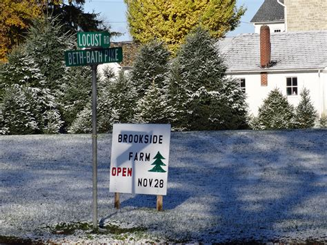 christmas tree farms allentown pa best 28 tree farms in lehigh valley tree farms in allentown pa tree