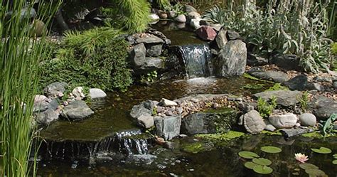 Backyard Wildlife Habitat by Building A Backyard Wildlife Habitat Understanding Pond
