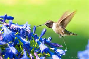 Attracting Butterflies And Hummingbirds To Your Backyard Attract Hummingbirds Gardening Pinterest