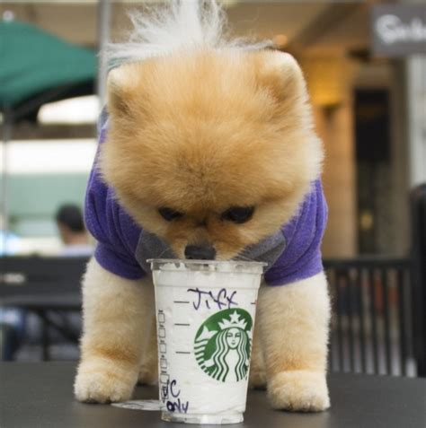 what of is jiffpom puppy power insta dogs word desire