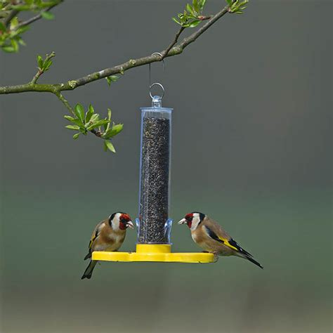 buy goldfinch feeder tube delivery by waitrose garden in