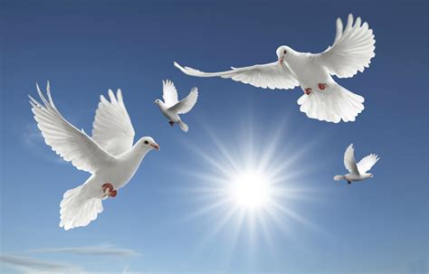 images of doves dove wallpapers find best dove wallpapers in hd
