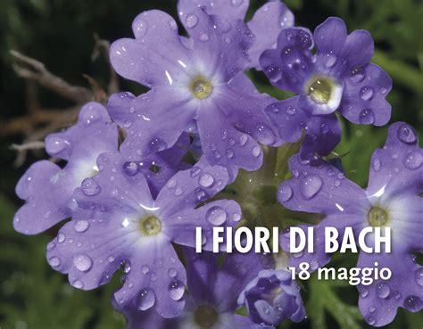 i fiori di bach a cosa servono yawp passioni in movimento l energia delle passioni